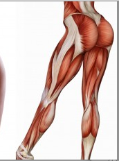 90 Muscles of Female Lower Body Zones